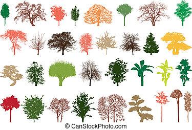 árvores, cor
