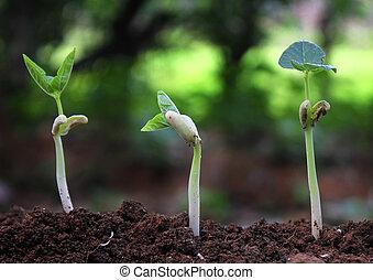 árvores, crescendo, ligado, fértil, solo, em, germinação, sequência, /, crescendo, plantas, /, planta, crescimento