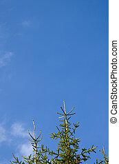 árvores, crescimento, para, a, céu