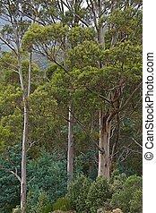 árvores, em, a, madeiras