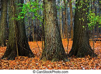 árvores, em, a, madeiras, com, outono sai