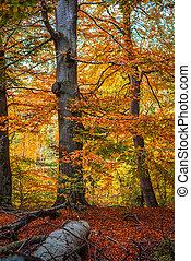 árvores, em, a, madeiras, em, a, outono