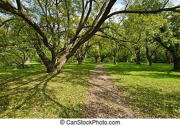árvores, em, a, montreal, jardim botanic