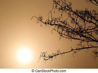 árvores, em, a, nevoeiro