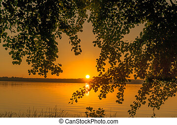 árvores, em, amanhecer, ligado, um, lago pequeno