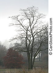 árvores, em, inverno