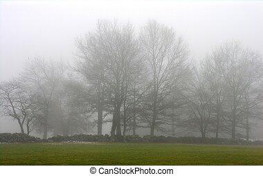 árvores, em, inverno, fog.