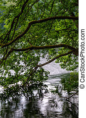 árvores, em, lago, schlachtensee