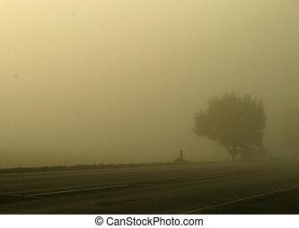árvores, em, nevoeiro