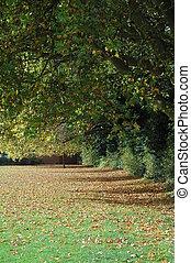 árvores, em, outono