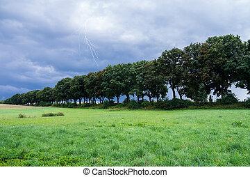árvores, em, paisagem