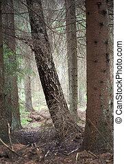 árvores, em, um, secos, floresta
