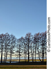 árvores, fila