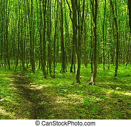 árvores., floresta