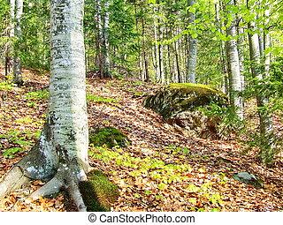 árvores, floresta, e, madeiras