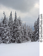 árvores inverno