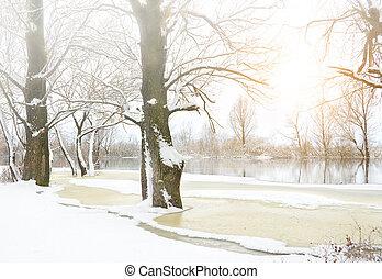árvores inverno, coberto, com, frost.