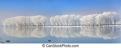 árvores inverno, coberto geada