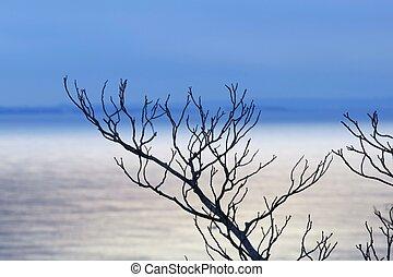 árvores inverno, costa