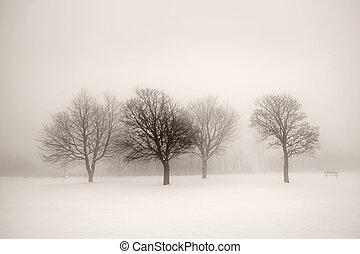 árvores inverno, em, nevoeiro