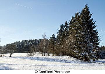 árvores inverno, nevado