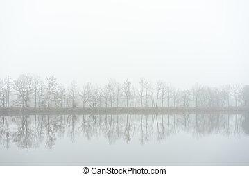 árvores, ligado, a, banco, de, lake., outono, nevoeiro, mood.