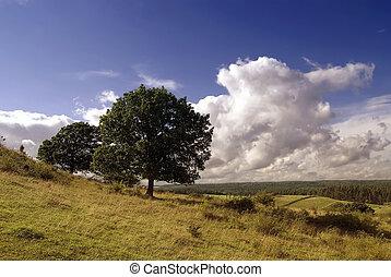 árvores, ligado, a, colina