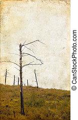 árvores mortas, ligado, grunge, fundo
