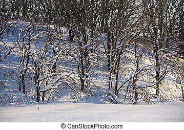 árvores., neve