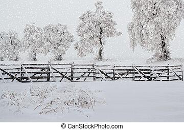 árvores neve, em, paisagem inverno