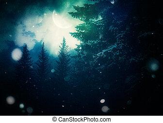 árvores, noturna, inverno, abeto