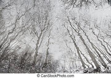 árvores, nu, refletido, água