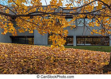 árvores, outono