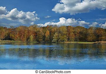 árvores outono, refletir, em, lago
