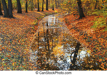 árvores outono, refletir, em, rio