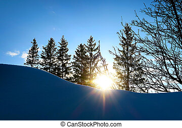 árvores, paisagem, inverno
