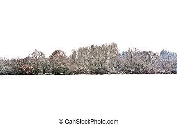árvores, paisagem inverno