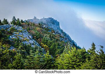 árvores pinho, e, rochoso, ápice, em, avô, montanha, norte,...