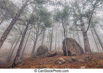 árvores pinho, em, a, nevoeiro