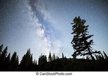 árvores pinho, silueta, meio leitoso, céu noite