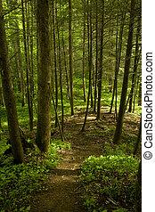 árvores, rastro, whiteoak, pia