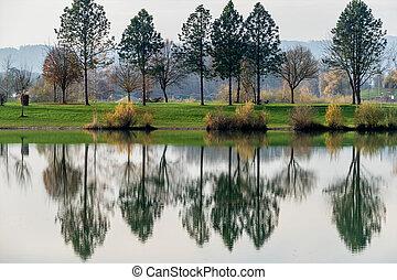 árvores, refletir, em, a, lago