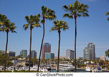 árvores, skyline, califórnia, longo, praia palma, porto
