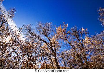 árvores, sob, a, céus azuis