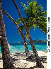 árvores, tropicais, rede, palma, entre, praia, vazio
