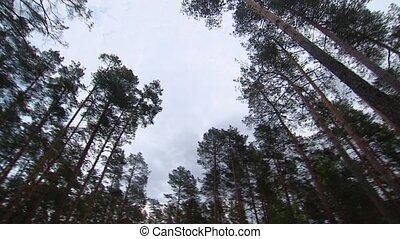 árvores., vegetação, around., coroas, forest.