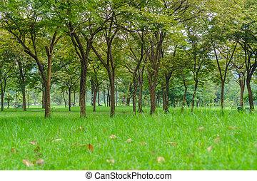 árvores verdes, em, bonito, parque