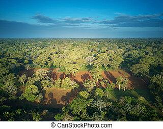 árvores verdes, em, floresta