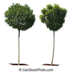 árvores verdes, isolado, branco