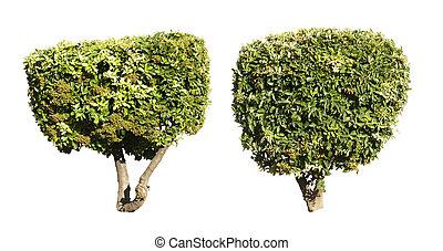 árvores verdes, isolado, ligado, white.